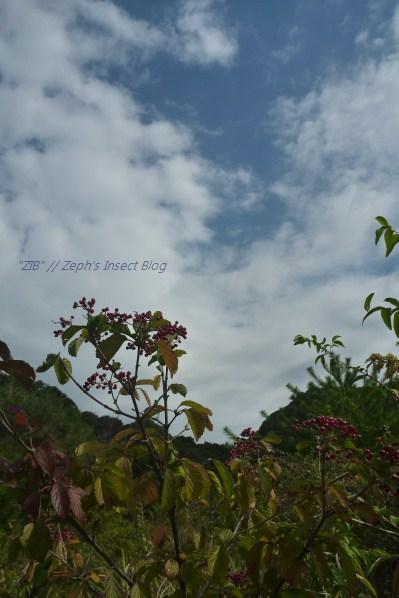 2012_11_03 10_05_07.jpg