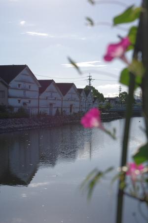 2010_08_09 アサガオ.jpg