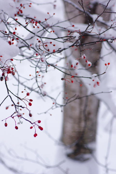 2011_12_23 15_02_59.jpg