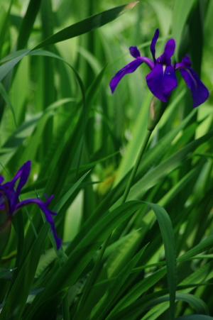2012_04_29 10_17_17.jpg