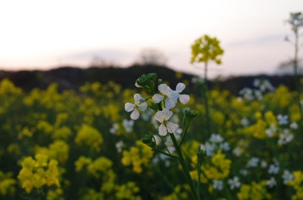 2014_04_05 17_22_12.jpg